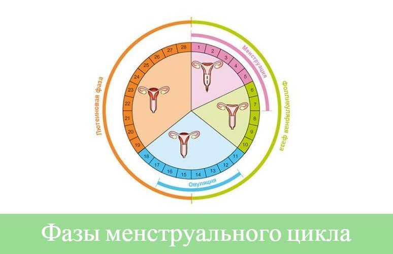 менструальный цикл фазы