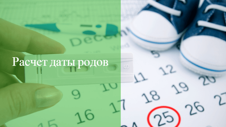 срок родов по месячным рассчитать